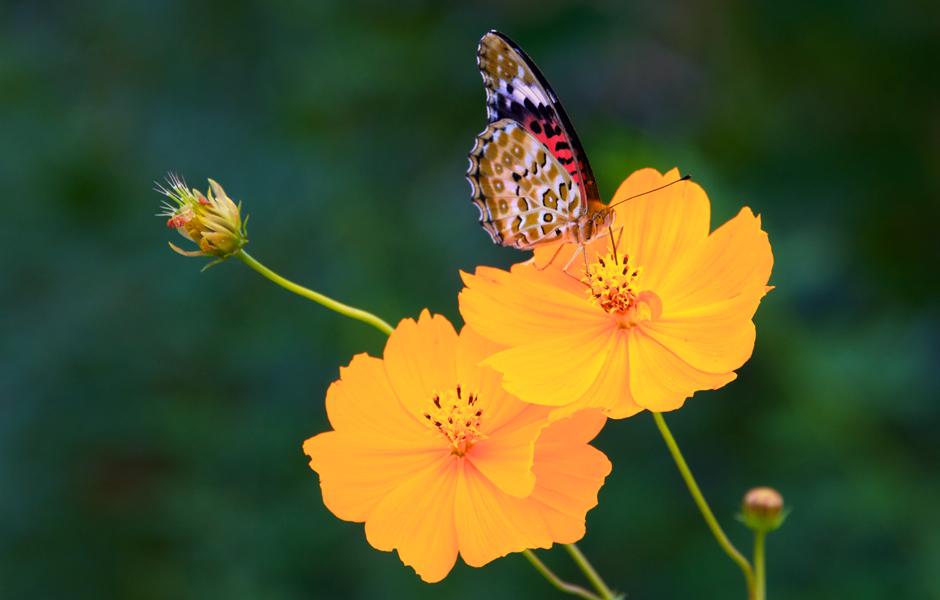 butterfly-japan-kumano-kodo