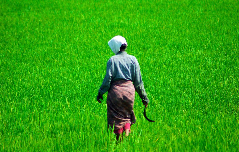 india-kerala-backwaters-farmer