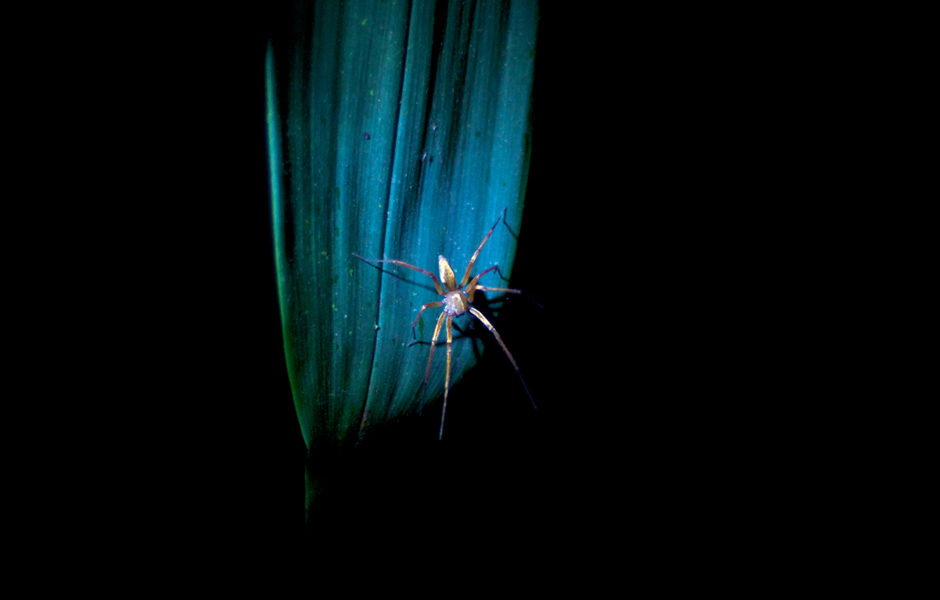 spider-night-safari-ecuador-cloud-forest