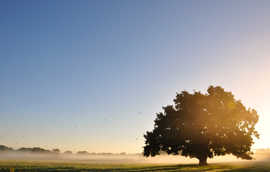 sussex-england-tree-sunrise