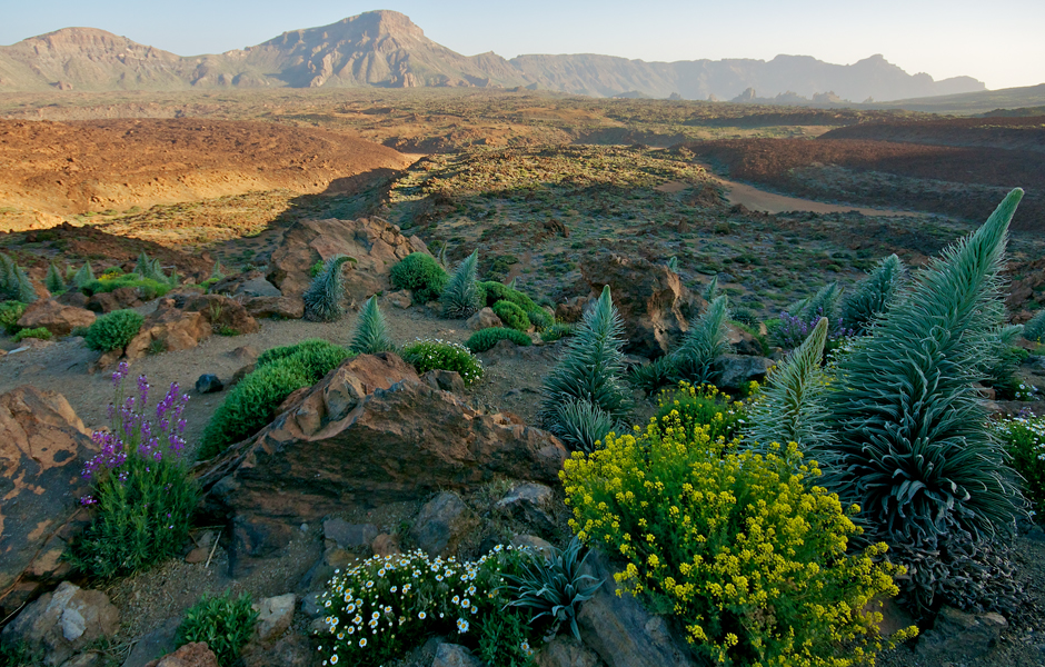 tenerfire-mount-teide-national-park