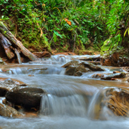 Ecuador-Cloud-Forest,-River-Slow-Shutter-Speed
