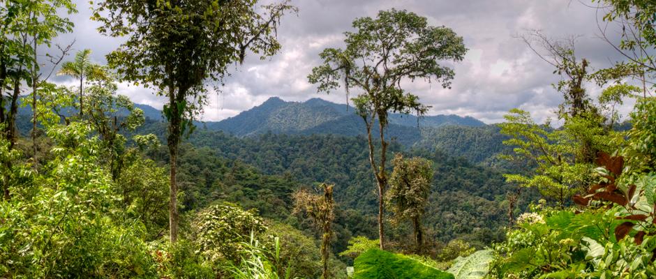 Ecuador-Cloud-Forest-View,-Mashpi