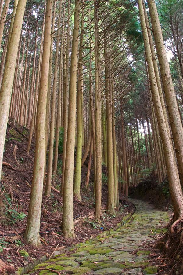 Kumano-Kodo-Trail-3