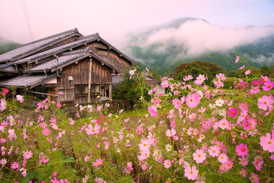 Kumano-Kodo-Wildflower-mountain-view
