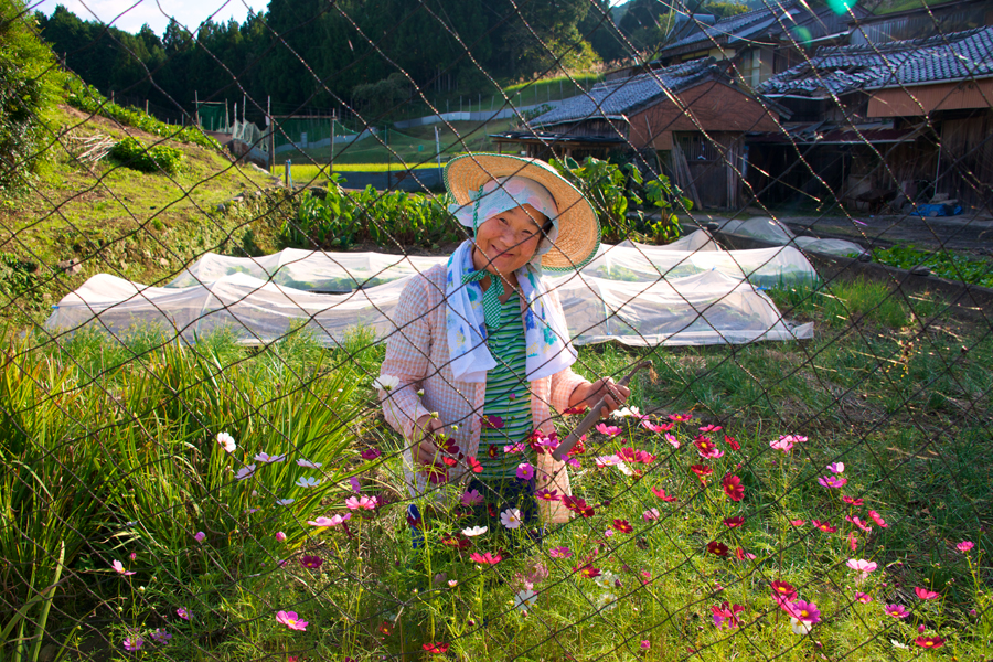 Kumano-Kodo-Wildflowers-farmer