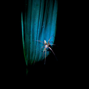 Spider,-Night-Safari-Cloud-Forest-Ecuador