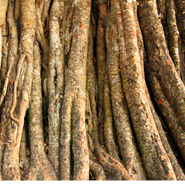 Trees-close-up-Ideas